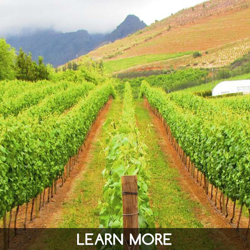 Private wineland tours from Cape Town
